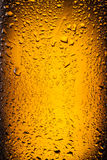Drops on a bottle beer. Royalty Free Stock Photo