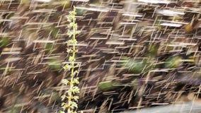 Дождевые капли вниз с травы стоковое изображение rf