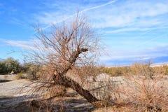 долина смерти Мертвые деревья стоковое изображение