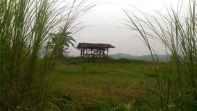 дом поля риса стоковое фото