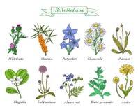 Ð ¡ olor kolekcja ręki rysujący ziele i pikantność ilustracji