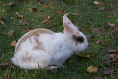 Ð ¡ olorful królik Fotografia Royalty Free