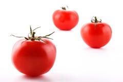Тomatoes Stockfotografie