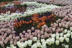 Ð-¡ omposition von tulips2 stockfoto