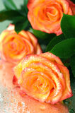 Вouquet of roses Stock Photo