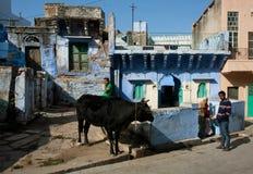 Ð-¡ ow som betar på gatan av den gamla indiska staden Arkivbild