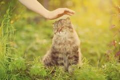 Ð-¡ på och hand på naturbakgrund Allergier till djur, kattfu fotografering för bildbyråer