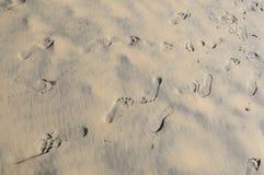 Тracks nella sabbia Fotografia Stock Libera da Diritti