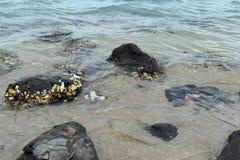 Ð ¡ rystal清楚的水和岩石在岸 免版税库存图片