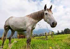 Ð-¡ urious Pferd Lizenzfreie Stockfotos
