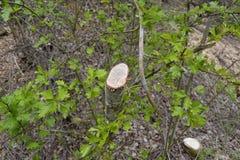 Ð-¡ ut eines Baums Lizenzfreie Stockbilder