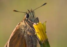 Ð'utterfly на цветке стоковая фотография rf