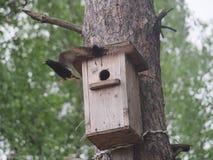 ÐStarling blisko birdhouse Sztuczny bird& x27; s gniazdeczko obraz stock