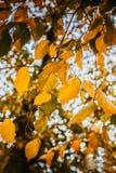 Ðutumn Blätter stockbild