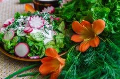 Салат свежих органических редиски и огурца с укропом и зелеными луками одетыми со сметаной стоковые изображения rf