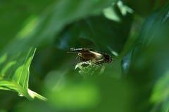 Садятся на насест черно-белые бабочки на зеленых листьях стоковое фото rf