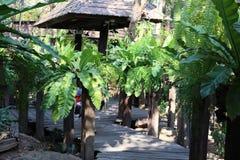 Садовничать и дорожки с красивыми зелеными деревьями dave, азиатский стиль стоковые изображения rf