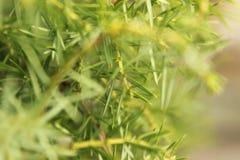 Свежая солнечная естественная предпосылка с яркими ыми-зелен листьями подсвеченными по солнцу стоковая фотография rf