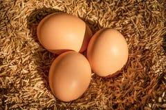 Свежие яичка цыпленка в гнезде стоковое фото