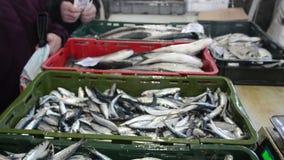 Свежие рыбы моря на рынке Рынок морепродуктов Сардины на льде для продажи на улице Fishmonger продавая рыб и морепродуктов Диспле видеоматериал