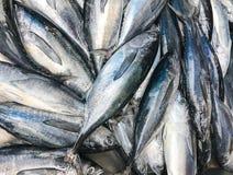 Свежие рыбы скумбрии на рынке морепродуктов стоковое фото rf