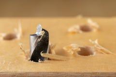 Сверлить отверстие в древесине Деревянные сверло и переклейка в мастерской плотничества стоковые изображения