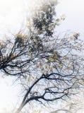 сень стоковое изображение rf