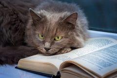 Серый кот лежит на открытой книге Чтение вашего любимого book_ стоковые фотографии rf