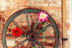 Сиена, Тоскана/Италия 23-ье февраля 2019: цветки в стене стоковое фото rf