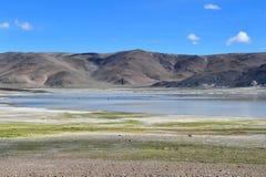 Сильно соляное озеро Drangyer Tsaka в Тибете летом, Китае стоковые фото