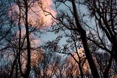 Силуэты деревьев с предпосылкой захода солнца стоковые фото
