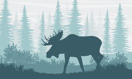 силуэт Лось с большими рожками на предпосылке канадских елей иллюстрация штока