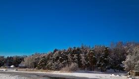 Син зимы стоковые фотографии rf