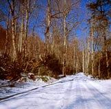 Сиротливая проселочная дорога в зиме стоковая фотография rf