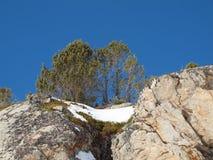 Скала на снежном наклоне против голубого неба с уединенным деревом на верхней части стоковая фотография rf