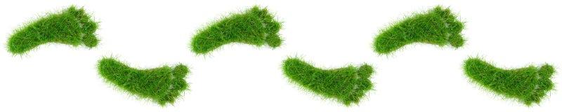 Следы ноги травы на белой предпосылке стоковая фотография rf