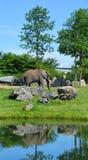 Слоны большие млекопитающие Elephantidae семьи стоковая фотография rf