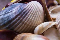 Смешанные раковины моря много типов и размеров стоковое изображение