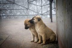 2 смешанных щенят породы сидя в виде спереди 2 маленьких собаки сидя на поле балкона стоковая фотография