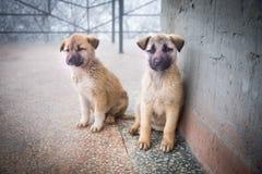 2 смешанных щенят породы сидя в виде спереди 2 маленьких собаки сидя на поле балкона стоковое фото