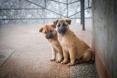 2 смешанных щенят породы сидя в виде спереди 2 маленьких собаки сидя на поле балкона стоковые фотографии rf