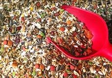 Смешивание еды птицы с красным лопаткоулавливателем стоковые изображения rf