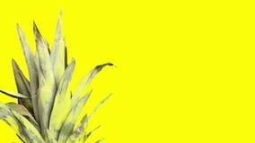 Смешной плод ананаса в солнечных очках идя через желтую предпосылку сток-видео