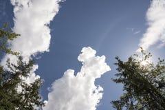 Смотреть вверх на деревьях стоковое фото rf