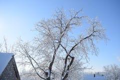 Снег покрыл ветви дерева над снежной крышей стоковое изображение rf