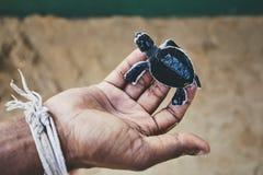 Спасение одной черепахи дня старой зеленой стоковое фото rf