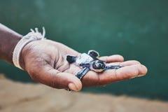 Спасение одной черепахи дня старой зеленой стоковое изображение