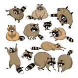 Cute cartoon raccoon. Set of color illustrations in vector, cute cartoon raccoon, raccoon characters royalty free illustration