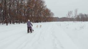 СЪЕМКИ УНИКАЛЬНОГО ТРУТНЯ ВОЗДУШНЫЕ, сиплый пакет бежать на снеге с людьми воссоздания за ими вытягивая их на сток-видео