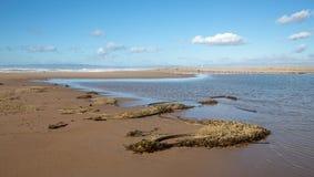 Сушить келп и траву моря на лимане реки Santa Maria на песчанных дюнах Rancho Guadalupe в центральной Калифорния США стоковые изображения